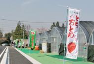 井頭観光いちご園